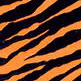 Zebra Orange Animalier 11,9x72